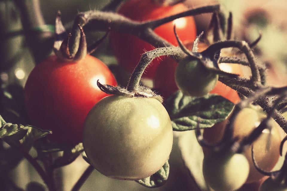 tomato-676532_960_720
